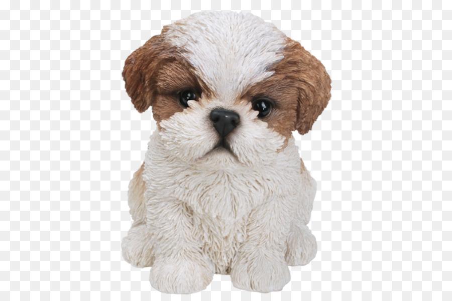 Shih Tzu Puppy Bichon Frise Poodle Yorkshire Terrier Maltese Shih