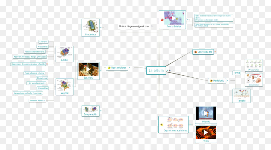 Concept Map Biology Cell Tissue Organelle Eso Png Download 2580