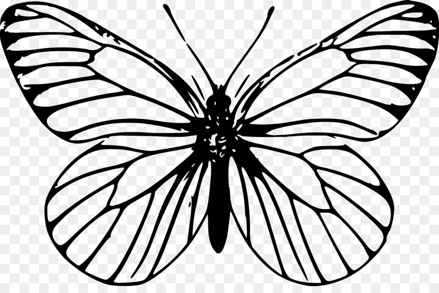 butterfly insect outline drawing clip art butterfly
