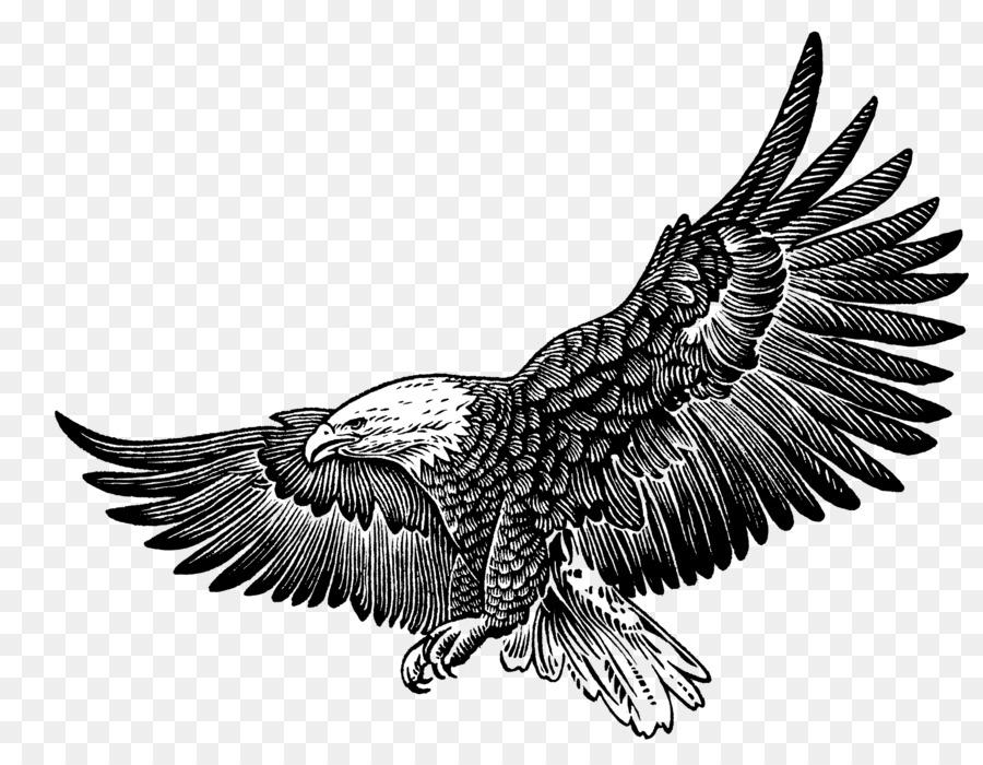 fcfb1c5be7d Philadelphia Eagles Bald Eagle T-shirt Fly