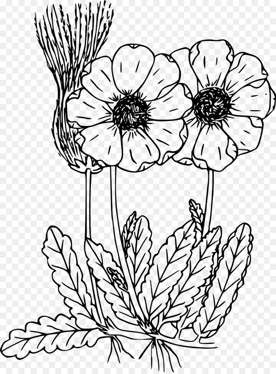 Coloring Book Drawing Wildflower