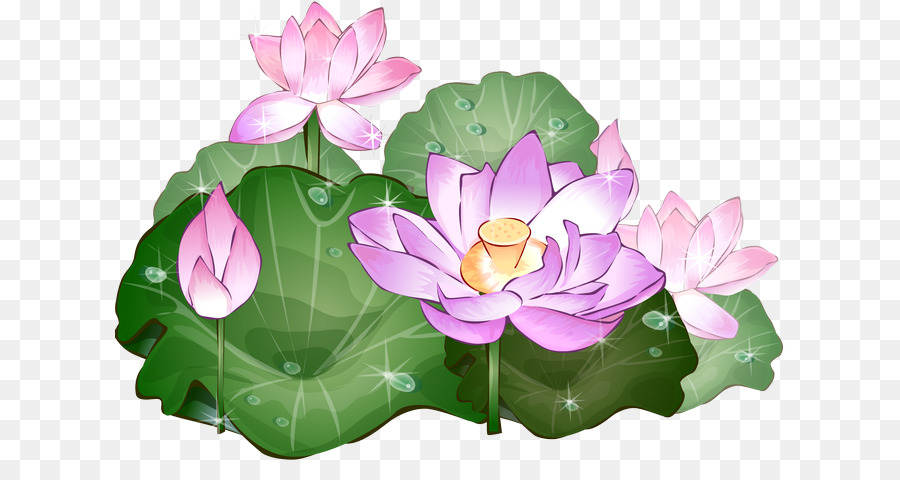 Nelumbo Nucifera Drawing Picture Frames Flower Png Download 670