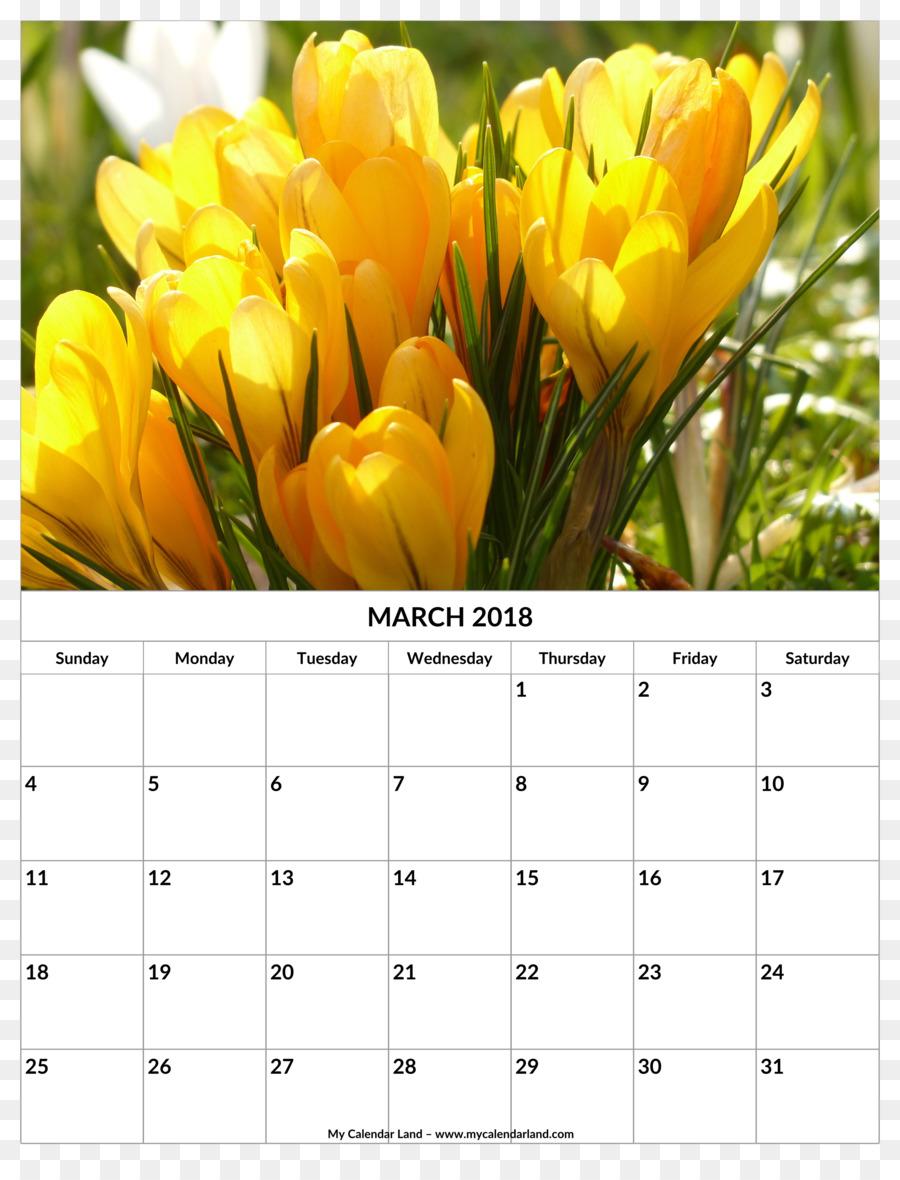 Tulip Flower Yellow Crocus Flavus Flower Rattan Calendar Template