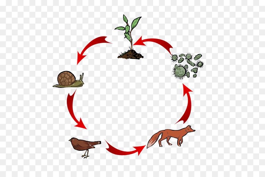 food chain heterotroph food web trophic level energy png download