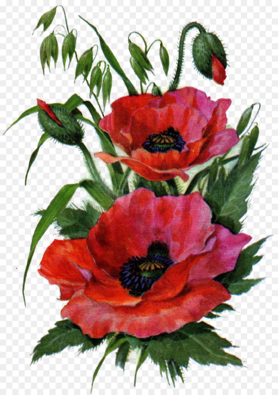 Garden Roses Poppy Flower Drawing Floral Design Poppy Flower Png