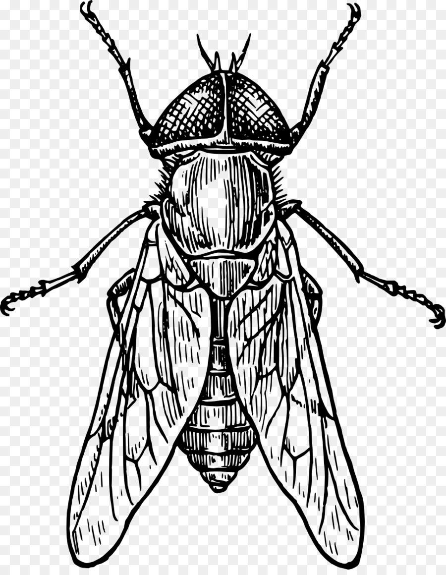 beetle drawing line art clip art beetle png download 969 1237