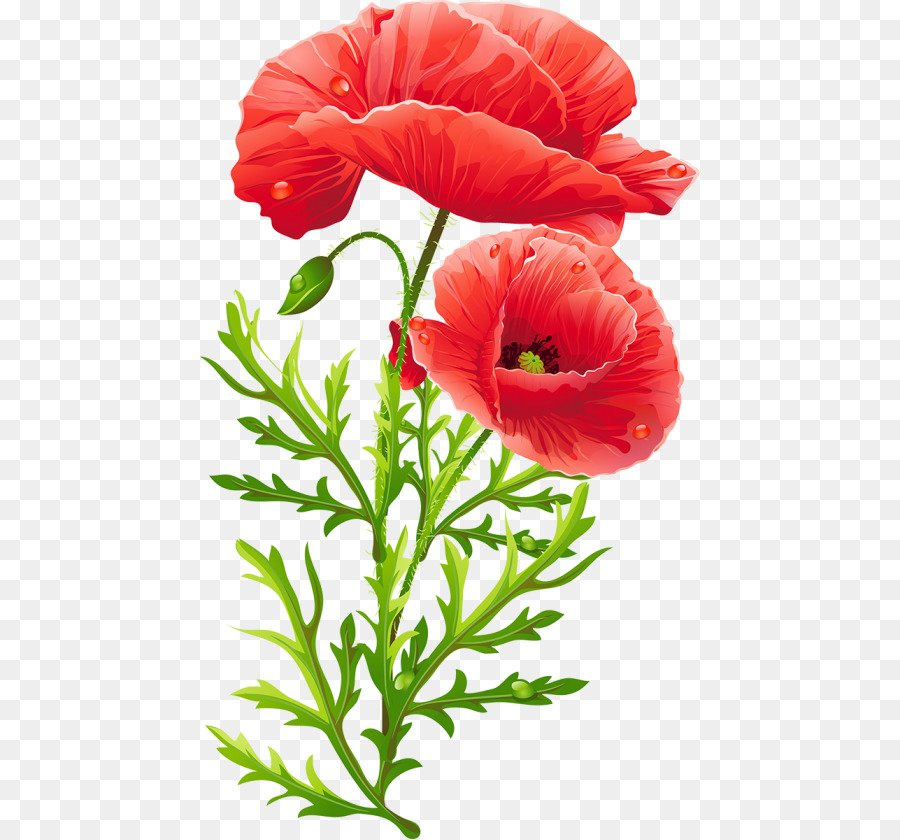 Flower bouquet Poppy Floral design Clip art - flower png download ...