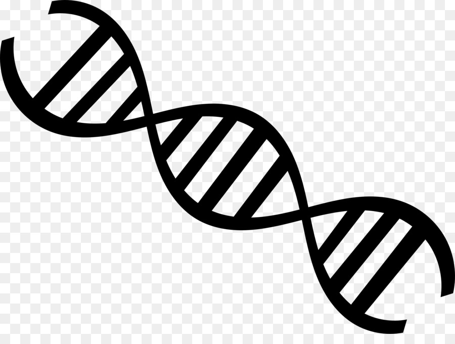 DNA Nucleic Acid Double Helix Genetics Clip Art