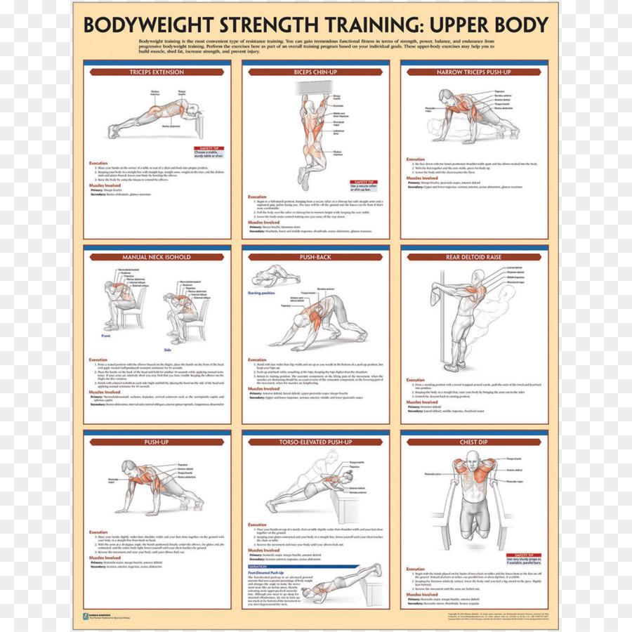 El Entrenamiento de la fuerza Anatomía de Peso corporal ejercicio de ...