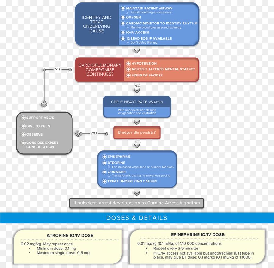 Algorithm Advanced Cardiac Life Support Perfusionist Pediatric