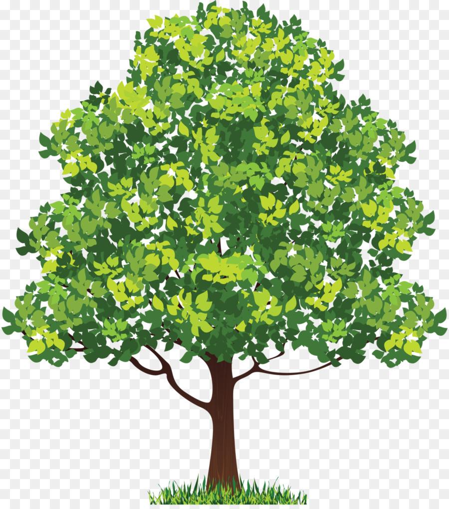 Neem Tree Clip Art Feminine Vector Png Download 1138 1280 Free