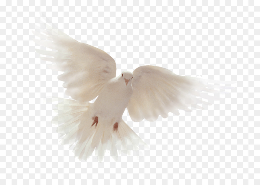 Bible Holy Spirit Columbidae Doves As Symbols God Png Download