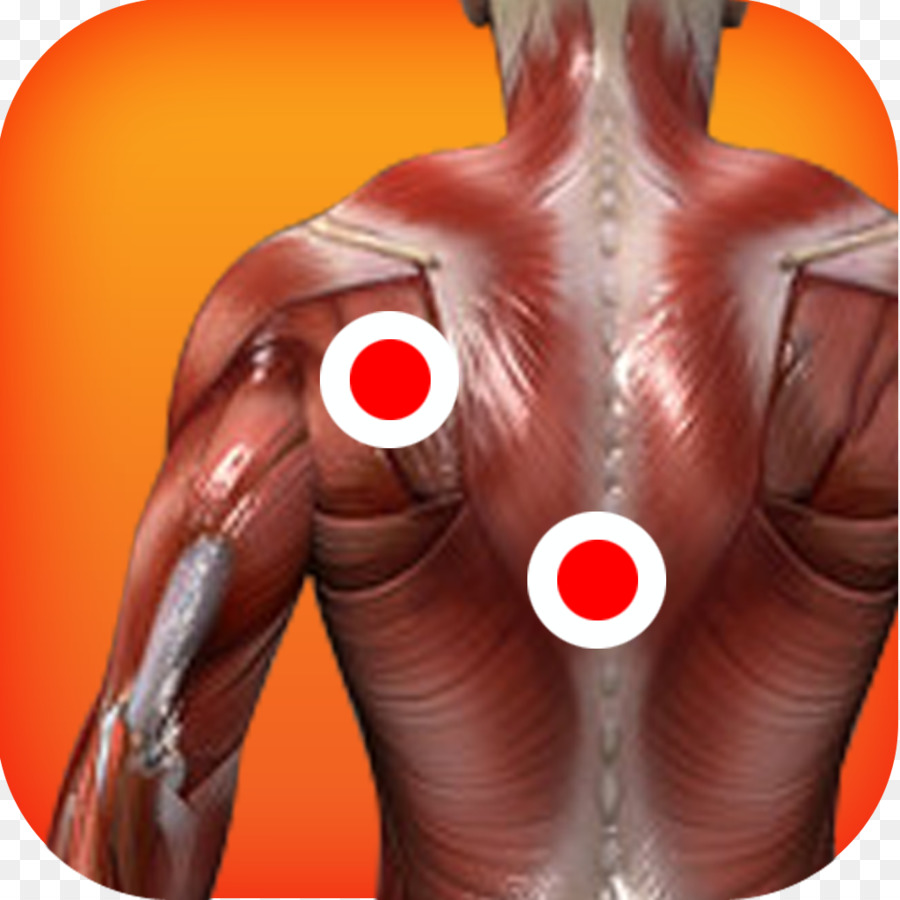 Myofascial trigger point Muscle Human body Anatomy Therapy - the ...