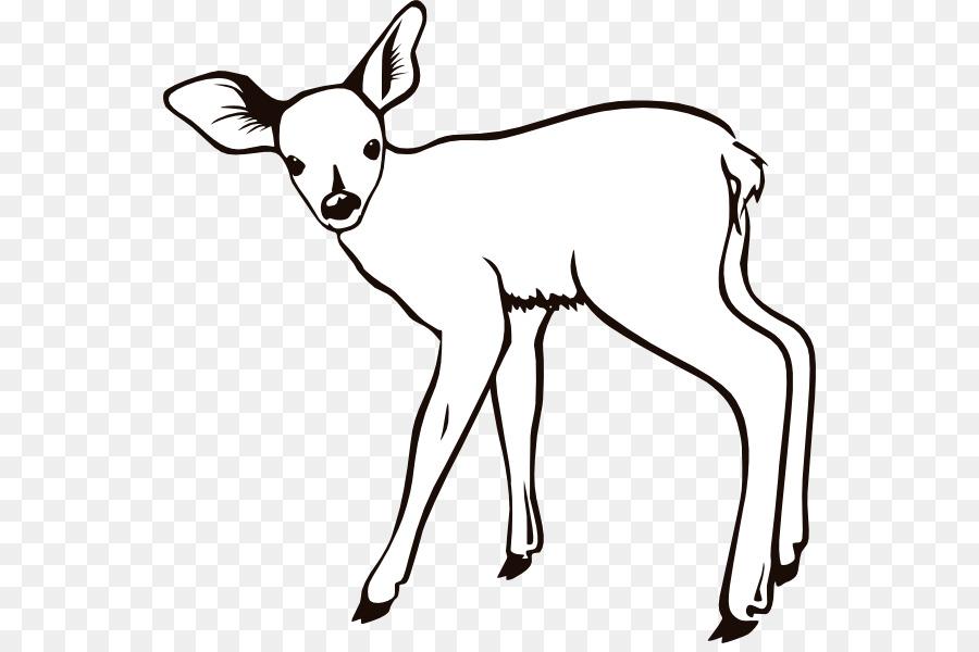De renos, ciervos de cola Blanca libro para Colorear, imágenes ...