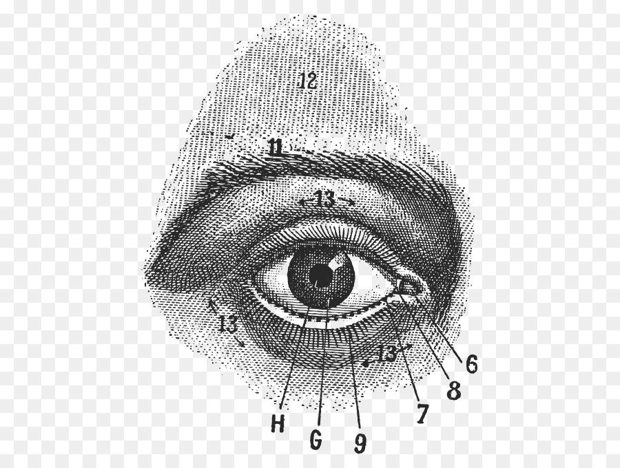 Ojo humano de Dibujo de Anatomía de la fotografía de Stock - Ojo png ...