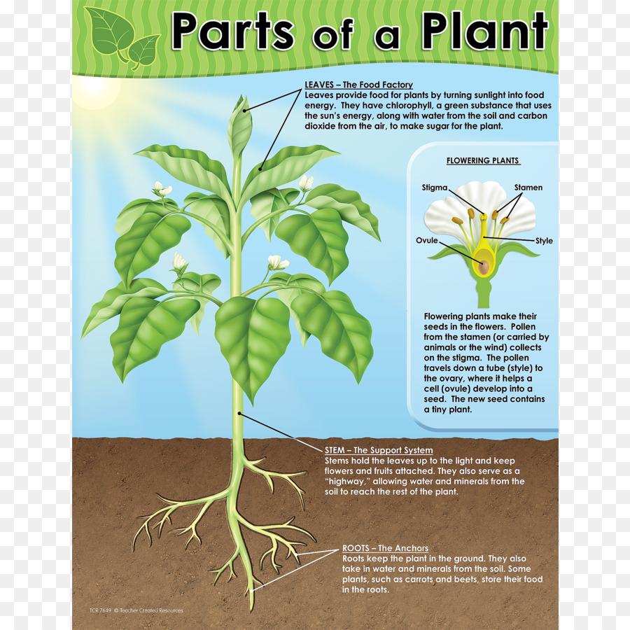 Chart Worksheet Plant Diagram Teacher Plant Png Download 900900