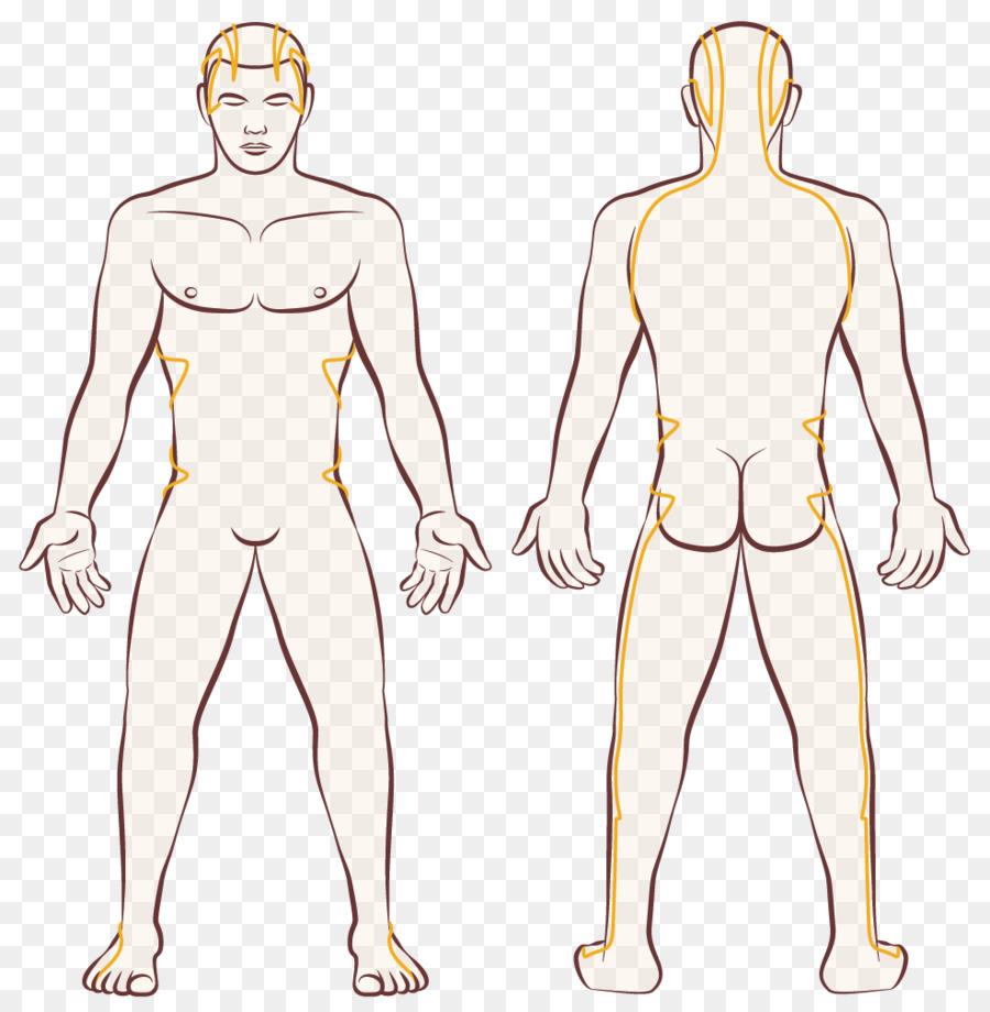 Cuerpo humano Femenino forma de cuerpo de Mujer - calentar el bazo y ...