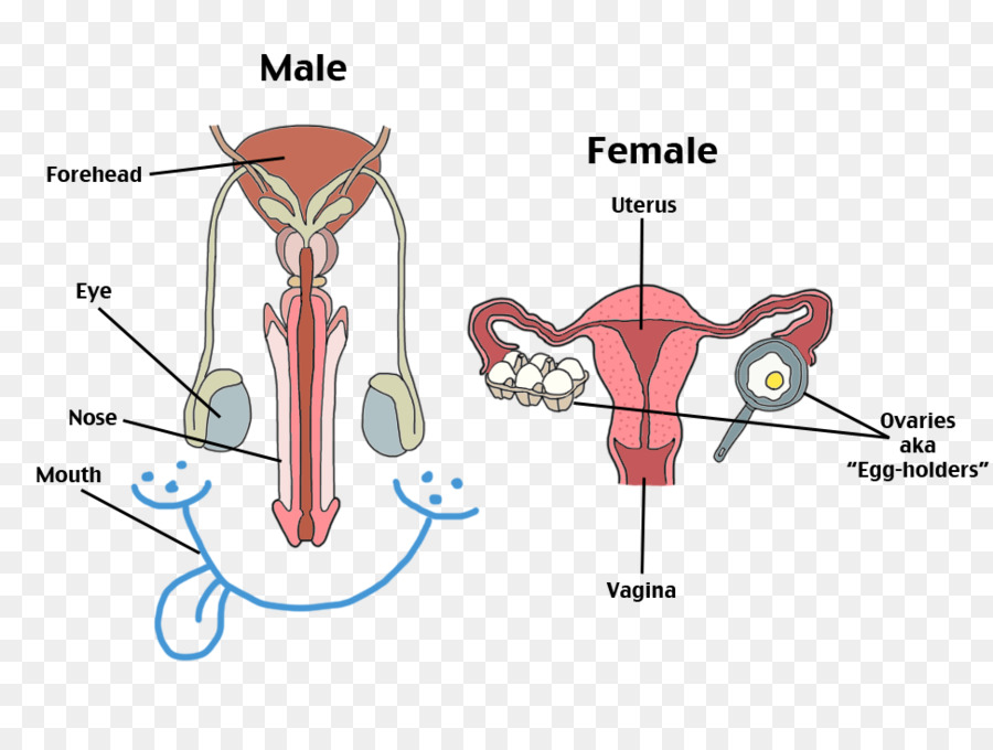Female reproductive system human reproductive system human body female reproductive system human reproductive system human body others ccuart Choice Image
