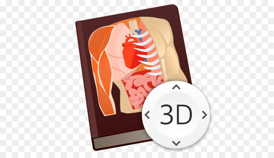 Humana anatomía Humana Anatomía del cuerpo de Juego Esencial de la ...