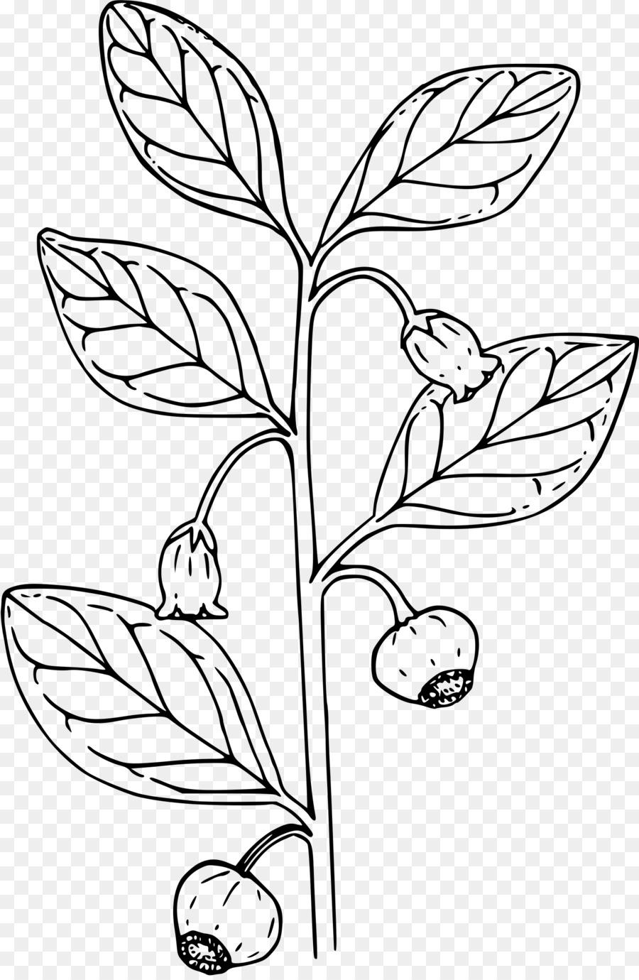 Libro para colorear Berry Lleva Clip art - hojas grandes png dibujo ...