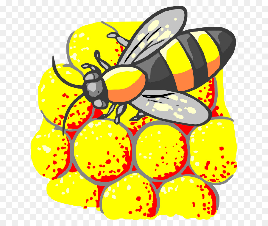 insect project honeybee Why are bees vanishing  honeybee a stinging, winged insect that collects nectar and pollen, and produces wax and honey honeybees live in large groups called.
