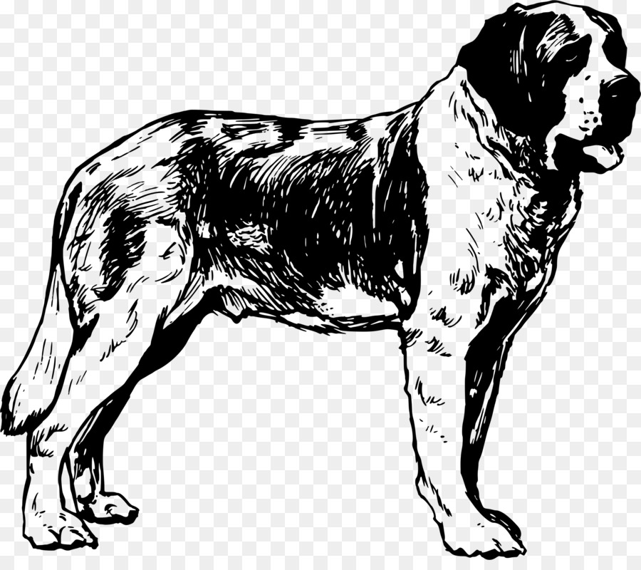 San Bernardo de Dibujo Clip art - bulldog clipart Formatos De ...