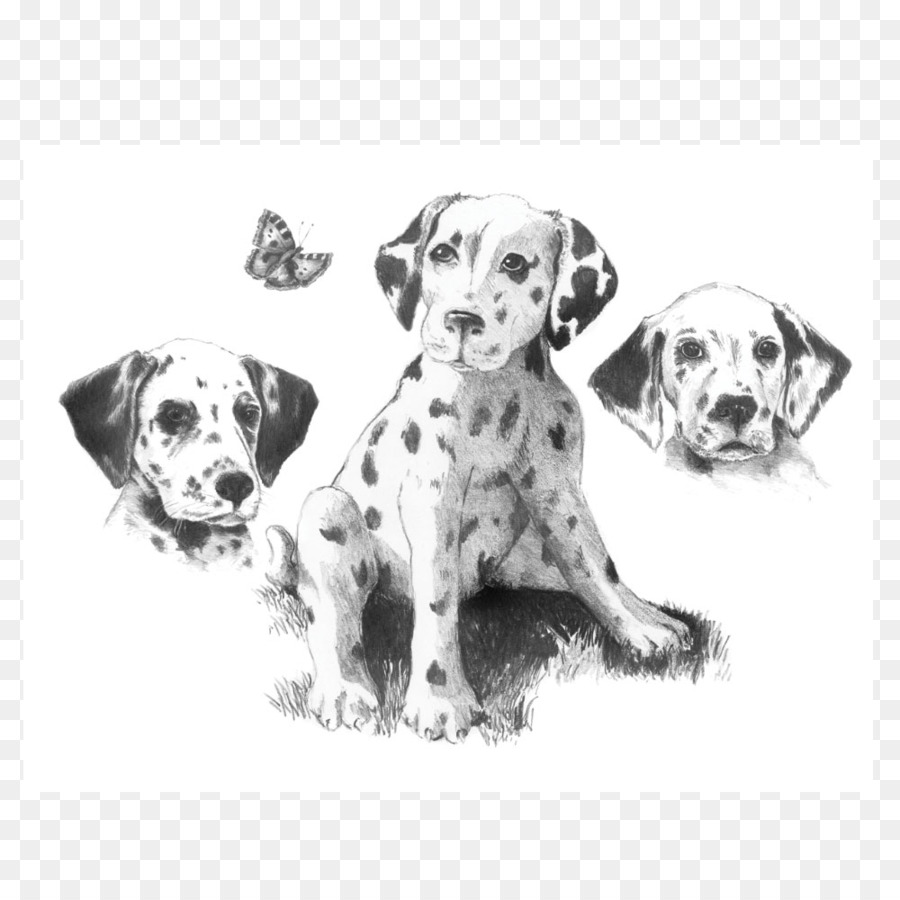 Sketching made easy pencil drawing companion dog dog crossbreeds png