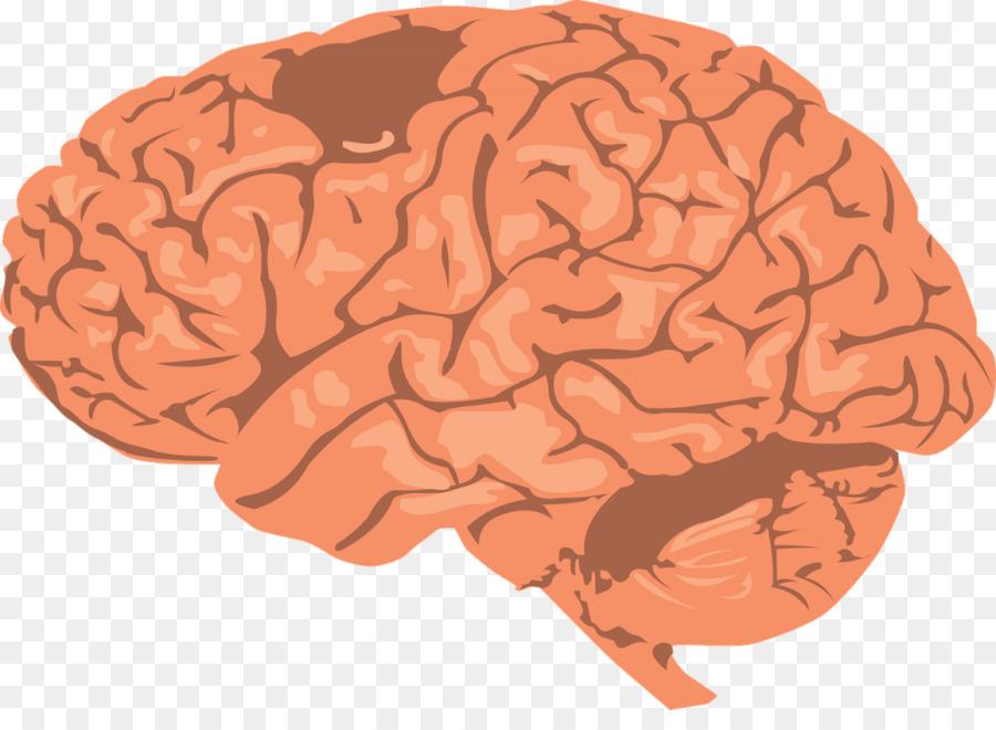 Sincronización de onda cerebral de la Investigación en Ciencias de ...