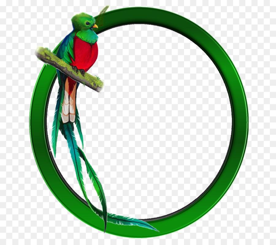 Guatemalan Quetzal Bird Resplendent Quetzal Bird Png Download