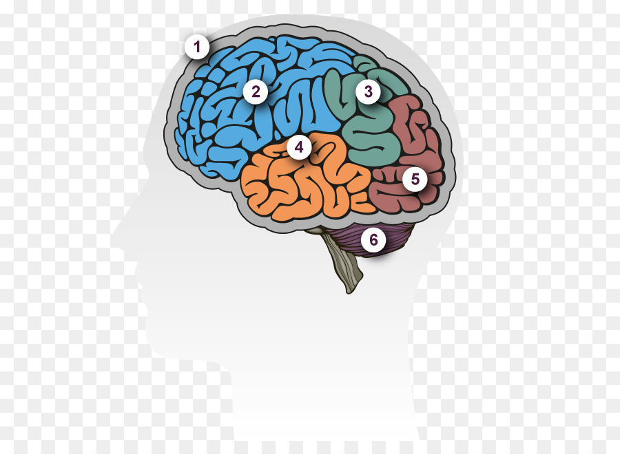 a description of alzheimer a brain disorder Alzheimer's disease (ad), also referred to simply as alzheimer's, is a chronic neurodegenerative disease that usually starts slowly and worsens over time.