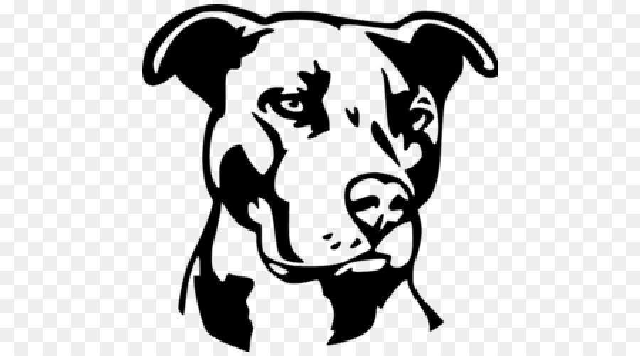 american pit bull terrier bulldog american bully puppy puppy Blue Pit american pit bull terrier bulldog american bully puppy puppy