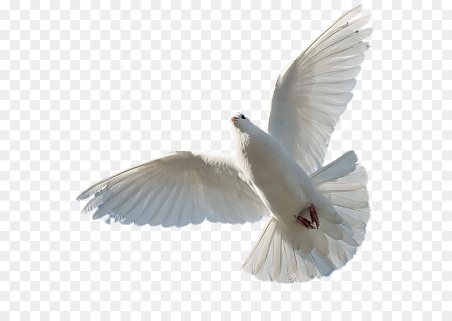 Bible Holy Spirit Sacred Trinity Saint God Png Download 627627