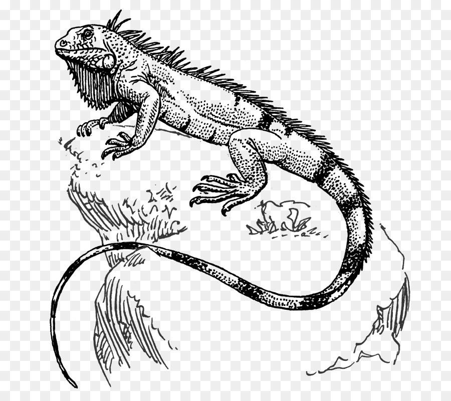 Lagarto iguana Verde Reptil Dibujo - lagarto png dibujo ...