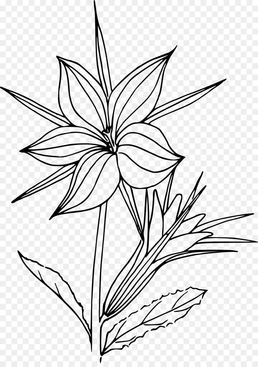 Libro para colorear Dibujo de las Plantas del Desierto ...