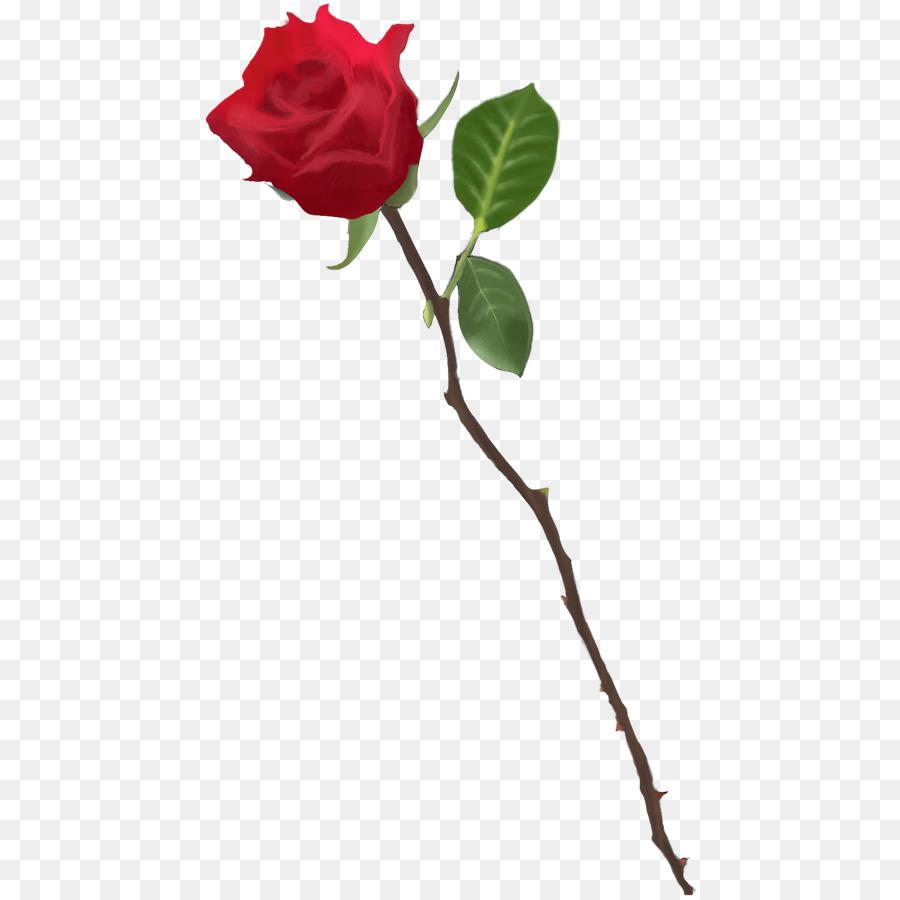 Garden Roses Drawing Rose Png Download 494 900 Free