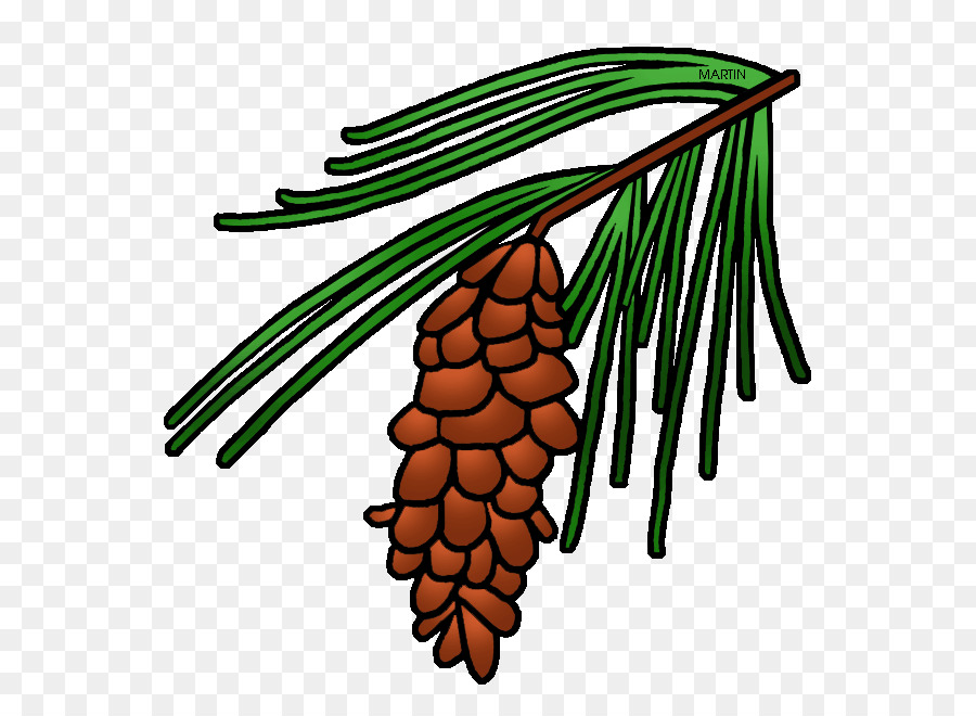 North Carolina Maine, Maine State flower White Pine Cone Clip art - others png download - 642*648 - Free Transparent North Carolina png Download.