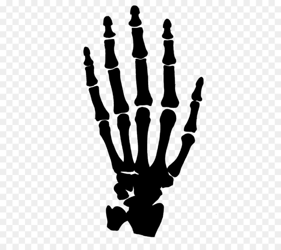 Human skeleton Carpal bones Hand Clip art - Skeleton png download ...