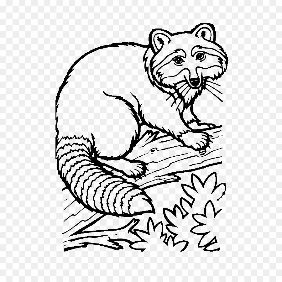 Waschbär Zeichnung Coloring Book Ausmalbild Waschbär Png