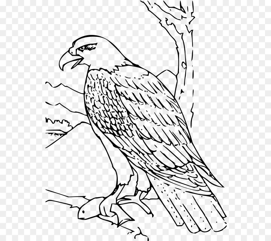 Águila calva libro para Colorear el águila real, el Águila Arpía ...