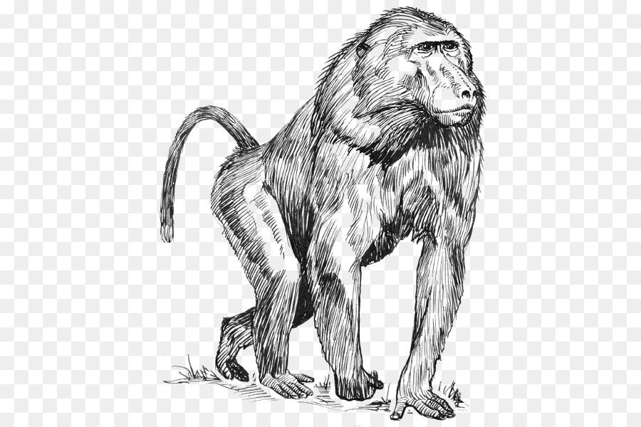Mandrill Dibujo de babuinos Hamadryas Clip art - mono Formatos De ...
