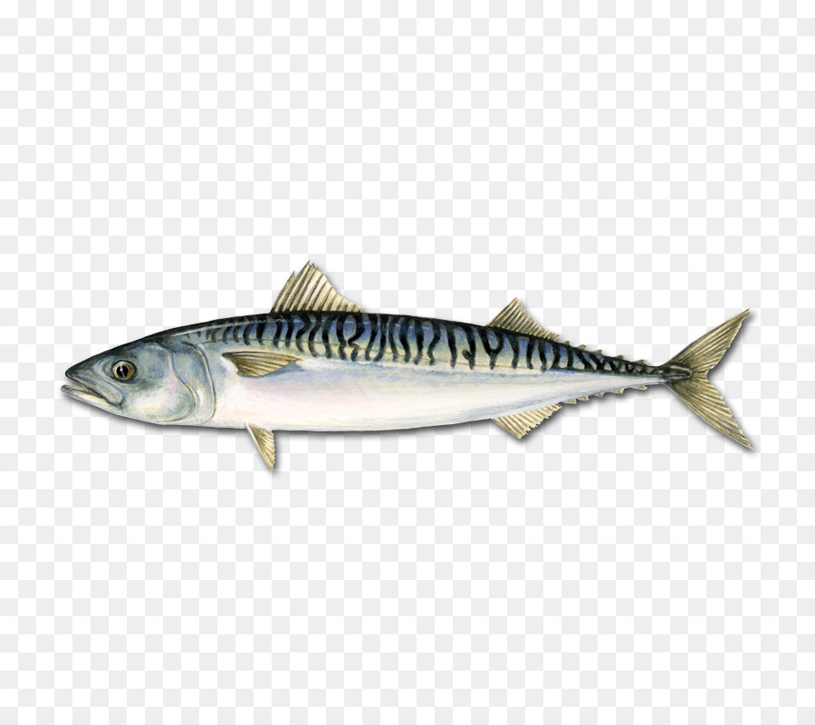Atlantic mackerel Pelagic fish Atlantic bluefin tuna - fish png ...