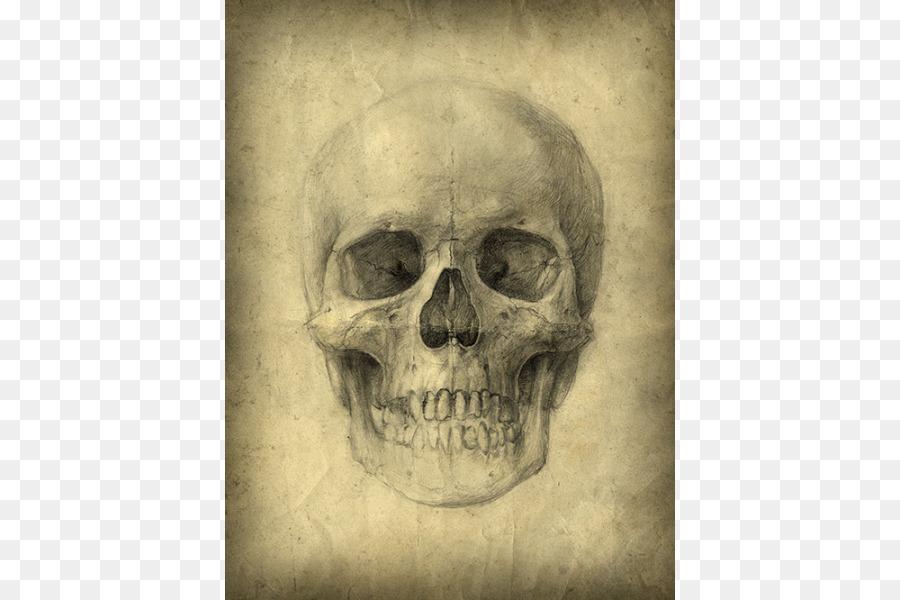 Cráneo humano de Dibujo de la Anatomía del esqueleto Humano - bien ...