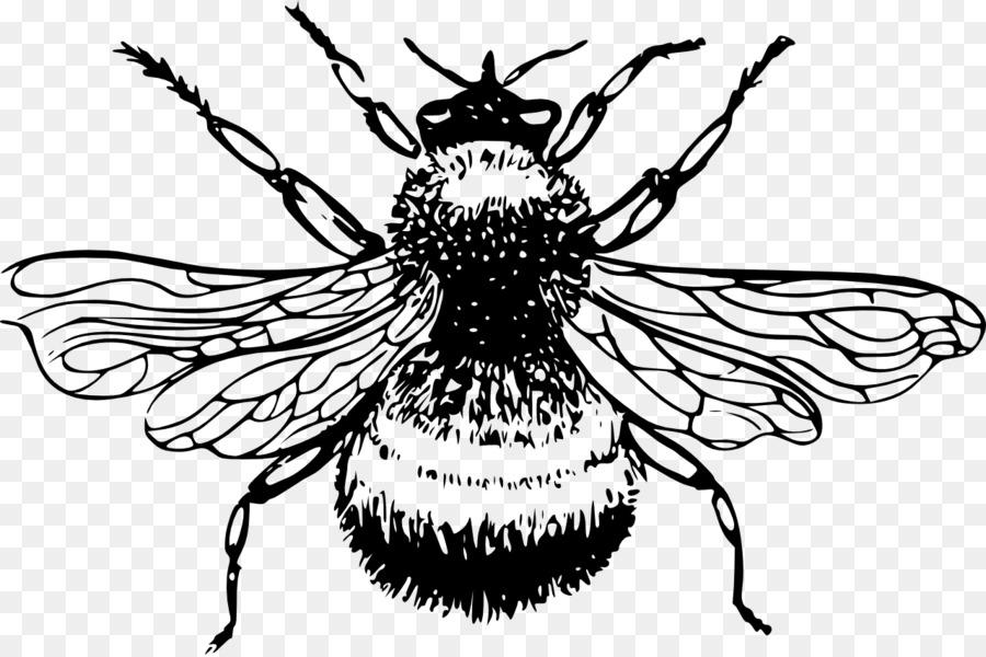 Europea oscuro de la abeja abejorro Bombus lucorum Miel de abeja ...