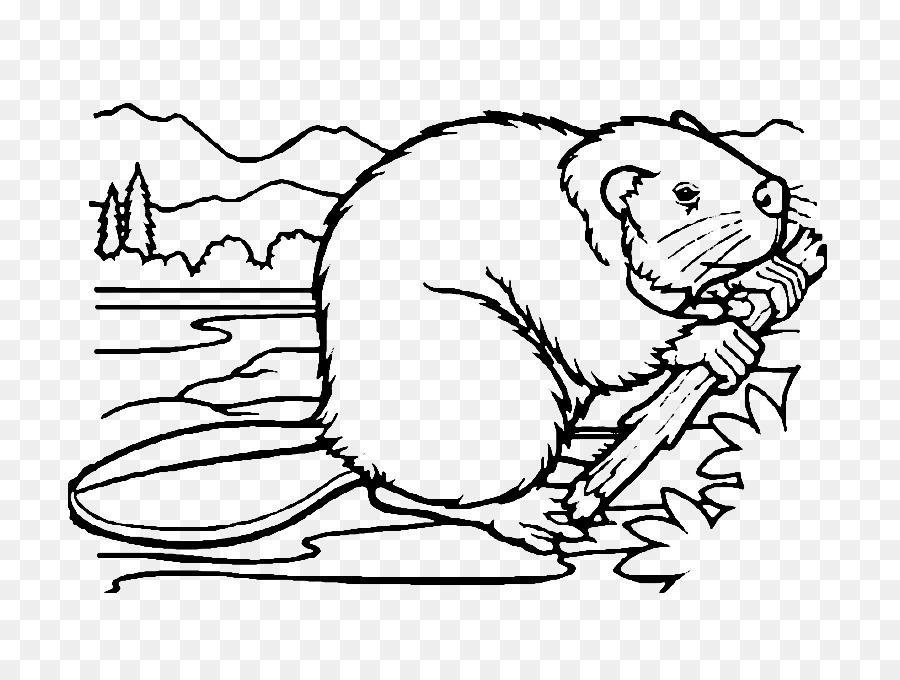 Beaver Bigotes libro para Colorear, Dibujo de - castor png dibujo ...
