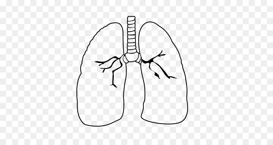Pulmón de Dibujo de Corazón para Colorear libro sistema Circulatorio ...