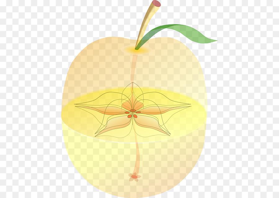 Paraíso de la Fruta del manzano anatomía de la Semilla - apple ...