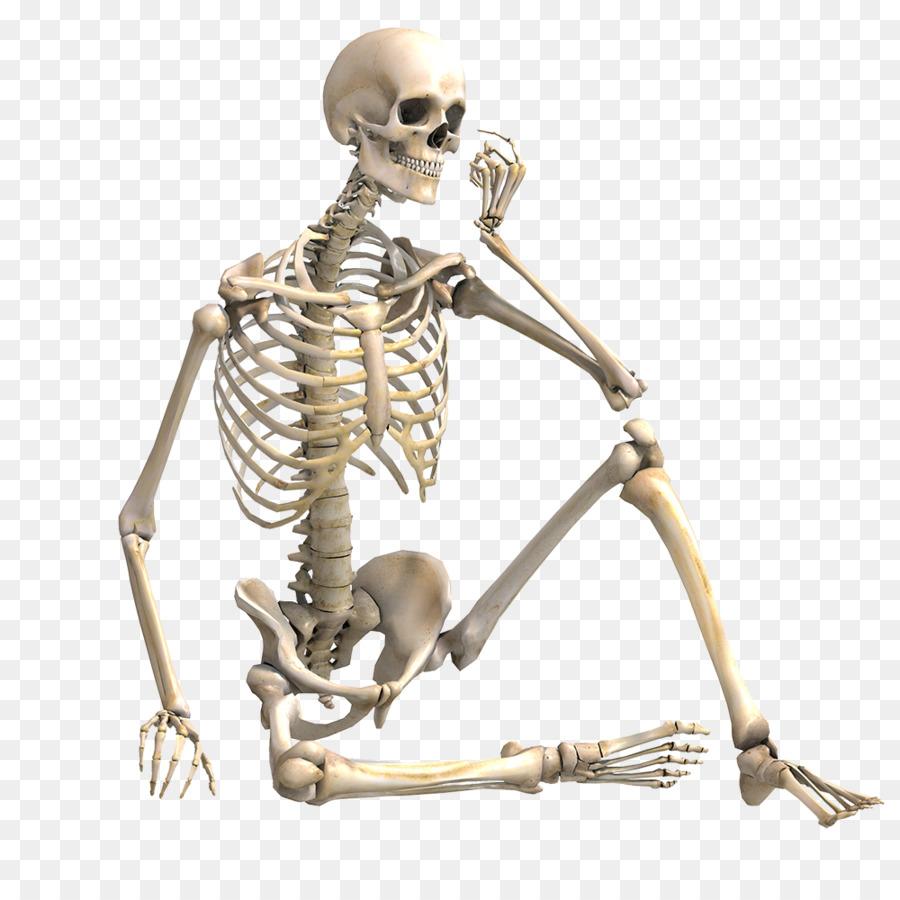 Esqueleto humano de la fotografía de Stock de Hueso músculo ...