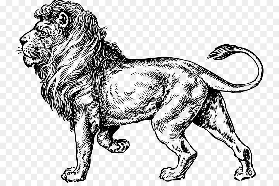 White lion clip art lion