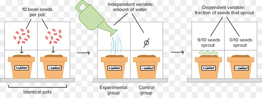 Grupo Experimental Scientific Method Science Scientist Science Png