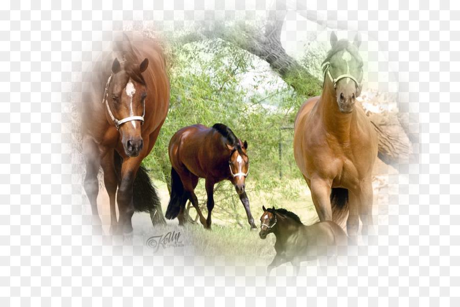 Mustang American Quarter Horse Kuda Wallpaper Desktop Wallpaper